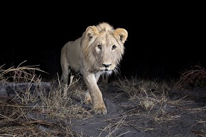 Identifying wildlife with AI and motion-triggered cameras